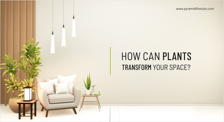 How can Plants Transform Your Space?